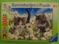 Kitties & Daisies (339)