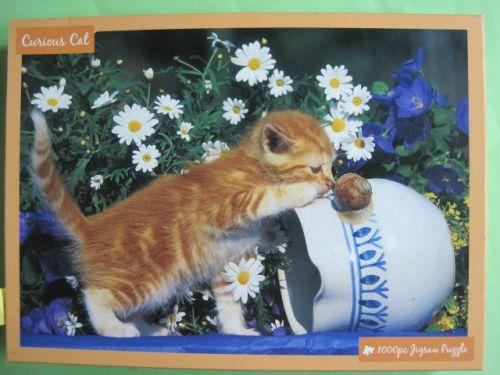 Curious Cat (532)