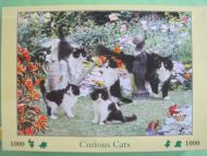 Curious Cats (863)